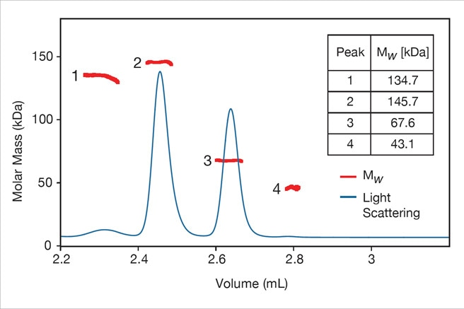 The miniDAWN TREOS II determines molecular weight independently of column calibration. Here MALS shows that the earliest-eluting molecule does not have the highest molar mass.