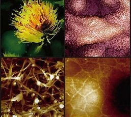 https://www.parksystems.com/index.php/medias/nano-academy/analyze-cells