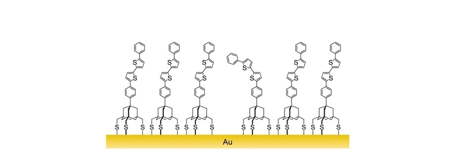 Diagram of a layer of sulphur based organic ligands assembling on a gold surface.