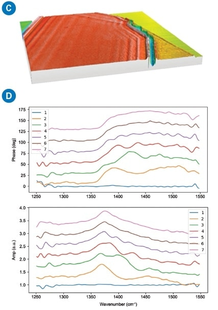 (a) AFM height image shows homogeneous hBN surface with different layers on a Si substrate; (b) s-SNOM amplitude shows strong interference fringes due to propagating SPhP along the surface on hBN; (c) s-SNOM phase shows a different phase signal with layer thickness; and (d) nano FTIR spectra of hBN.