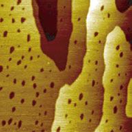 STM image of self-assembled monolayers (SAMs) of 1-octanethiol (CH3(CH2)7SH) on a gold/mica substrate - 150nm x 150nm image