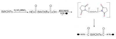 Biofunctionalization of SWCNTs by carboxylation and amidation employing cross-linkers.