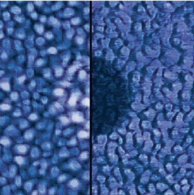 AFM recordings on Alkanethiol molecules deposited on gold using Dip-Pen Nanolithography® (DPN), NanoInk