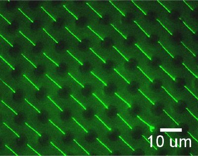 Fluorescence image of an array of stretched DNA