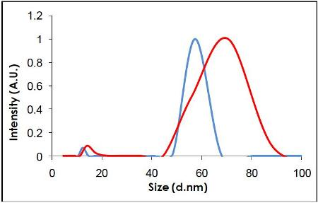 Measurement of the same sample by DLS.