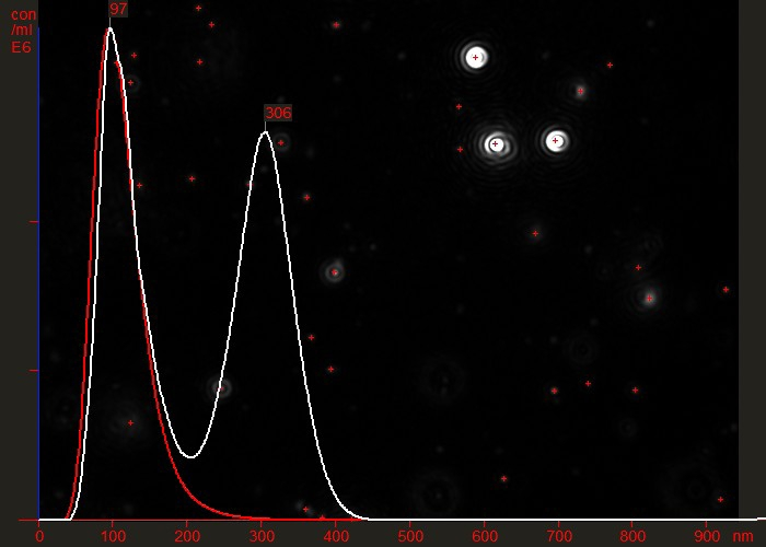Overlaid particle size distribution plots of a virus preparation before (white) and after (red) a final purification step.