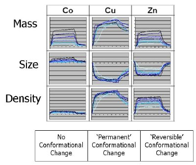 Examples of different Conformation Activity Relationships for similar affinity binding interactions of metal ions binding to prion protein (PrP). Shown are the mass of association and dissociation of different metal ions at different concentrations (from which the interaction affinity can be calculated) and the corresponding size and density profiles (from which the conformational changes can be measured). The maximum conformational change (Cu) is 0.04nm and each challenge was a 5 minute injection.