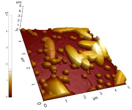 Surface morphology at the 5 µm × 5 µm scale of ZnO nanorod samples grown on GaN templates (a) 3D view and (b) top view with line analysis information. The image was acquired using high aspect ratio tip probes at 0.15 Hz with 256 x 256 pixel resolution.