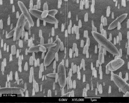 Scanning Electron Microscopy (SEM) images of the ZnO nanorod sample shown in Figures 3 (courtesy of Bell Labs, Lucent Technologies). Image magnification is 15,000x for figure (a) and 30,000x for figure (b), respectively. A 45 degrees sample tilt was employed.