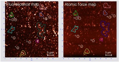 A confocal fluorescence map of NV centres in diamond nanocrystals (left) and the corresponding atomic force microscopy map of the diamond crystal profiles. This combined measurement technique coupled with theoretical modelling now enables the prediction of the stability of NV centres in a range of nanodiamond sizes.