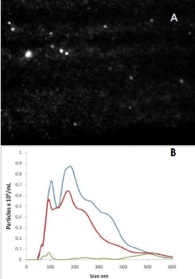 A) Fluorescence image from quantum dots attached via antibody to STBM particles. B) Particle size distributions from scattered light (blue), correct antibody (red) and incorrect (control) antibody (green). Note the number concentration vertical axis.