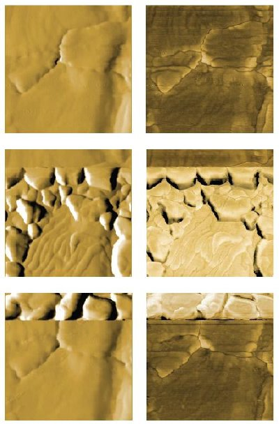 AFM images of bulk deposition and dissolution. Topography (left) and phase (right) of the bare gold substrate (top), the substrate during deposition (middle) and during dissolution (bottom). Topography is displayed as derived data and phase as raw data. Images are 800 nm in size and identically scaled for comparison.