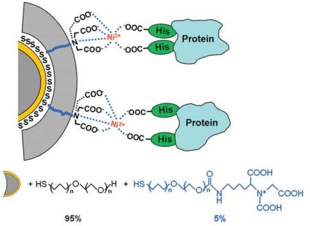 Mixed SAMs are formed on a gold-coated tip. Only a very low percentage of so-called NTA- terminated alkanethiols will establish a chelation with cations, which will also interact with polyhistidine groups belonging to peptides or proteins.