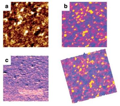 Peak Force TUNA images of P3HT thin film spin-coated on glass/ITO/PEDOT substrate, and annealed at 120°C. Shown are (a) topography, scale 10nm; (b) peak current, scale 300pA; (c) DMT modulus, scale 15MPa (d) the overlay of conductivity map on topography. Image size is 2 µm × 2 µm, taken at 1 nN Peak Force, 3V DC bias, using Bruker's PeakForce TUNA probe (Au coating, spring constant of 0.4N/m) on a MultiMode 8 AFM in a glove box with below 1 ppm O2 and H2O. Sample courtesy of Prof. Nguyen, UCSB.