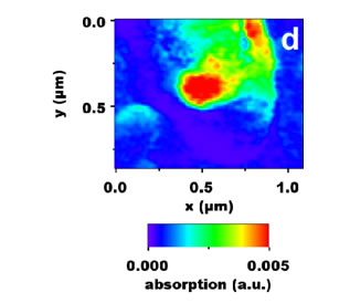 Chemical mapping of PHB (at 1740 cm-1) of the corresponding topogaphy a).