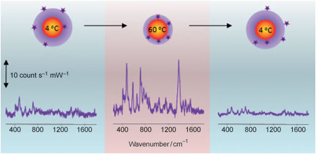 SERS spectra recorded from an Au@pNIPAM colloid in contact with 10 µM 1-naphthol, at low (left), high (middle) and low temperature again (right), corresponding to swollen (left and right) and collapsed (middle) microgel, as shown in the cartoons. A high quality SERS spectrum can only be recorded in the collapsed state because the naphthol molecules are trapped next to the gold cores.