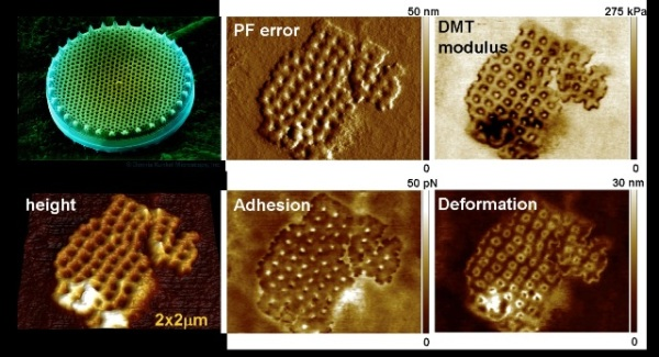 Imaging of phytoplankton cell wall with a BioScope Catalyst AFM. Top left: electron microscopy image of a diatom, sample courtesy of Dennis Kunkel, Astrographics. Most of the PeakForce QNM channels provide a remarkable contrast and high-resolution features.