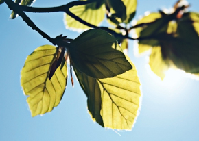 """DSSC technology arose from the concept of """"artificial photosynthesis"""" - attempting to replicate the ability of plants to turn sunlight into useful energy."""