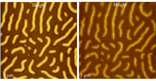 Brush macromolecules on mica substrates are visualized in the height images obtained in amplitude modulation and Hybrid mode, whereas only in the latter case side chains are clearly resolved. Sample of brush macromolecules – courtesy of Prof. S. Sheiko (UNC).
