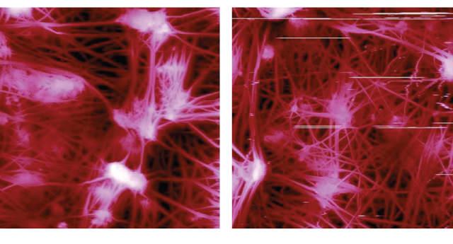 30μm scan of a Teflon membrane in PeakForce (left) and regular TappingMode (right). Artifacts visible in TappingMode operation are not present in the PeakForce Tapping data. (Images from Bruker Application Note #133.)