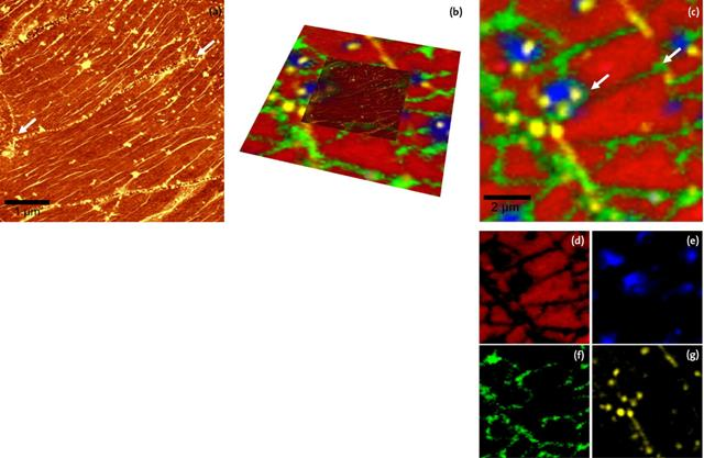 Defects in graphene layers (a) 5 x 5pm2 AFM topography image, topography range: 0-10nm. (b) AFM and Raman image overlaid (c) 10 x 10µm2 Raman image of the same sample area as shown in (a) with lower magnification.