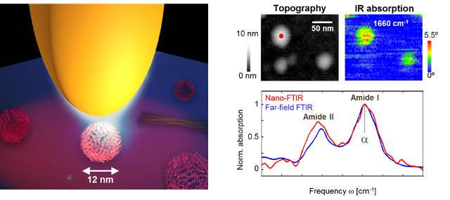 Infrared nanoimaging of a single protein complex (ferritin, 5000