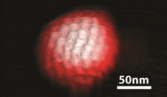 3D topography image of a single herpes simplex virus obtained in ScanAsyst mode in buffer solution