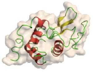 Lysozyme protein