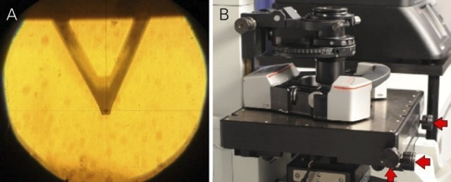 Cantilever with tip in the eyepiece of MicroTime 200 aligned to the cross hair (left image). The coarse positioning can be done by using the three micrometer screws at the sample stage (red arrows in right image).