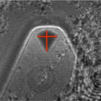 Backscatter image of a probe tip with marked tip apex (red cross), which is determined by the shape of the tip base.