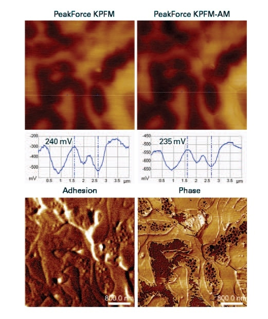 PeakForce KPFM and KPFM-FM Potential Maps and cross section profiles (top) of the Sn-Pb (60:40 by weight), and at bottom are the respective adhesion and phase imaging (4µm scan).