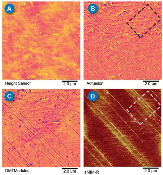 PeakForce sMIM images. (A) Topography; (B) adhesion; (C) DMTModulus; and (D) sMIM-R maps of carbon nanotubes (CNTs) aligned flat on an insulating substrate. Mechanical channels have higher sensitivity on visualizing the CNTs compared to topography. The sMIM-R channel confirms these CNTs have different conductivities as indicated by the square boxes on adhesion and sMIM-R channels. Note that no electrical contact is required as sMIM is performed based on the tip-sample capacitive coupling.