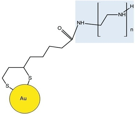 Schematic shows BPEI is attached to the lipoic acid-Au through an amide linkage. The BPEI moiety of the molecule is highlighted in blue.