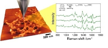 The TERS concept – a metalized tip is used to enhance the Raman response. An AFM image is shown to the left and sample Raman spectra taken from biofilm material is shown to the right.