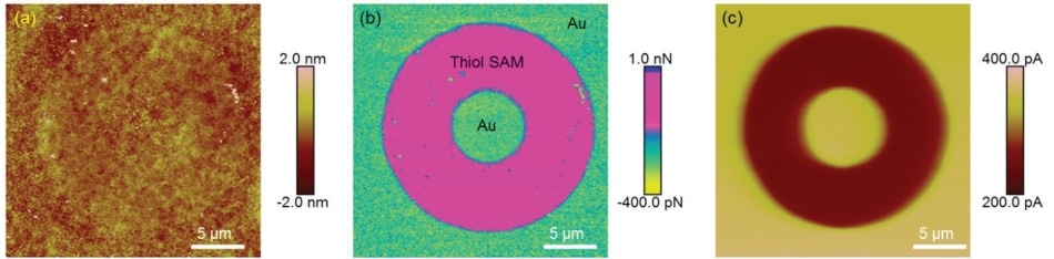 PeakForce SECM images of micro-contact printed CH3-thiol self-assembled monolayer (SAM) on an Au substrate: (a) topography; (b) adhesion; and (c) electrochemical activity. Solution, 5 mM [Ru(NH3)6]3+ and 0.1 M KNO3 (adapted and modified from Huang, Z. et al.32).