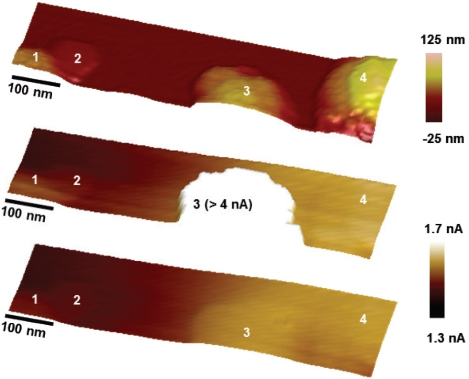 PeakForce SECM images of a semiconductor electrode decorated with nanoparticle catalysts; (a) topography; (b) tip current from the main scan; and (c) electrochemistry from the lift scan. The particles are numerically labelled for comparison.
