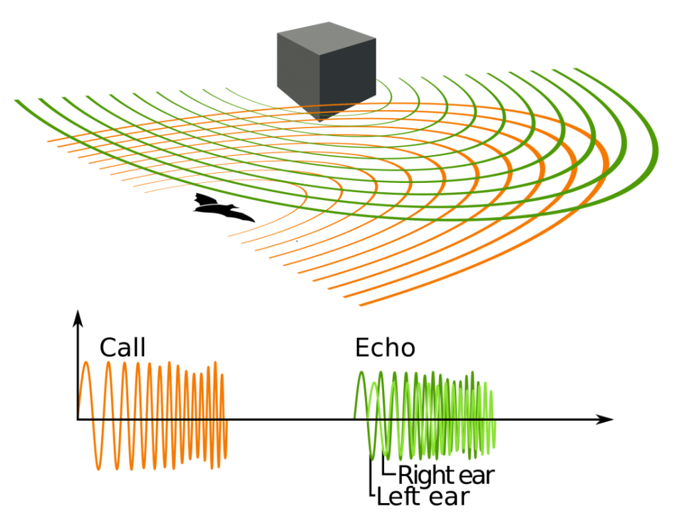 Echolocation of a bat based on transmission, reflection and reception of ultrasound. (Image: Petteri Aimonen, Wikipedia)
