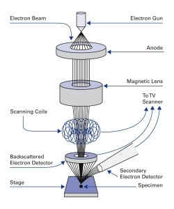 Principal design of a scanning electron microscope. (SEM) (Image: PI)