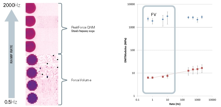 Force curve mapping of a blend of polystyrene (PS) and low-density polyethylene (LDPE) at a range of ramp rates. Force volume measurements are conducted at a frequency of 0.5 Hz to 10 Hz. PeakForce QNM samples the higher frequency range of 500Hz to 2 kHz. Note that contrast of LDPE starts out as a dark purple at low frequency and changes to a reddish contrast at higher frequencies, corresponding to an increase in modulus for this viscoelastic material. In contrast, the PS is uniformly pink throughout all of the measurements, indicating no change in modulus with frequency as expected. The plot on the right shows the DMT Modulus of the PS (blue diamonds) and the LDPE (red squares) over more than three orders of magnitude of ramp rate.