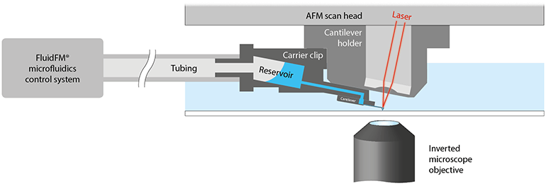 Flex-FPM extending the FlexAFM functionality with FluidFM technology: Local sample manipulation using hollow cantilevers