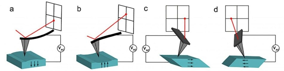 A schematic representation of (a-b) vertical and (c-d) lateral PFM. Vertical deflections are obvious through the AFM laser. The deflections correspond with (a) downward or (b) upward out-of-plane electrical polarization. Lateral PFM allows the cantilever to exhibit torsion in response to (c-d) lateral in-plane polarization directions. The direction of the polarization vector is indicated by the black arrowheads, in each case assuming that the relationship between polarization and crystal orientation is conserved.