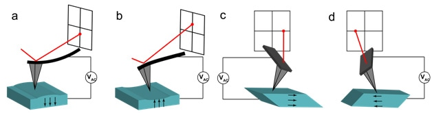 A schematic representation of (a-b) vertical and (c-d) lateral PFM. Vertical deflections are observed via the AFM laser. The deflections correspond with (a) downward or (b) upward out-of-plane electrical polarization. Lateral PFM allows the cantilever to exhibit torsion in response to (c-d) lateral in-plane polarization directions. The direction of the polarization vector is indicated by the black arrows, in each case assuming that the relationship between polarization and crystal orientation is conserved.