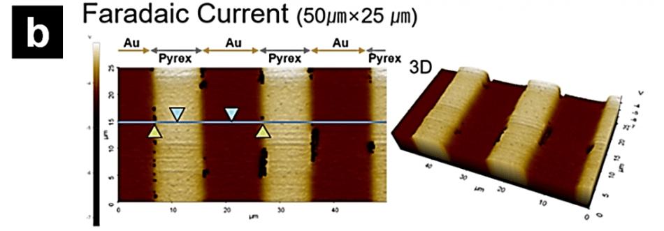 Representative SICM-SECM images. a) SICM topography image; b) SECM faradaic current image.