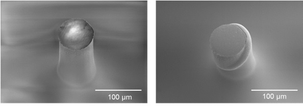 Electron micrographs of COPa fiber specimens before and after microcompression up to 20 percent strain.