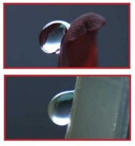 Top: rose petal. Bottom: hydrophobic biofilm. The Sdr values of the two surfaces are very close.
