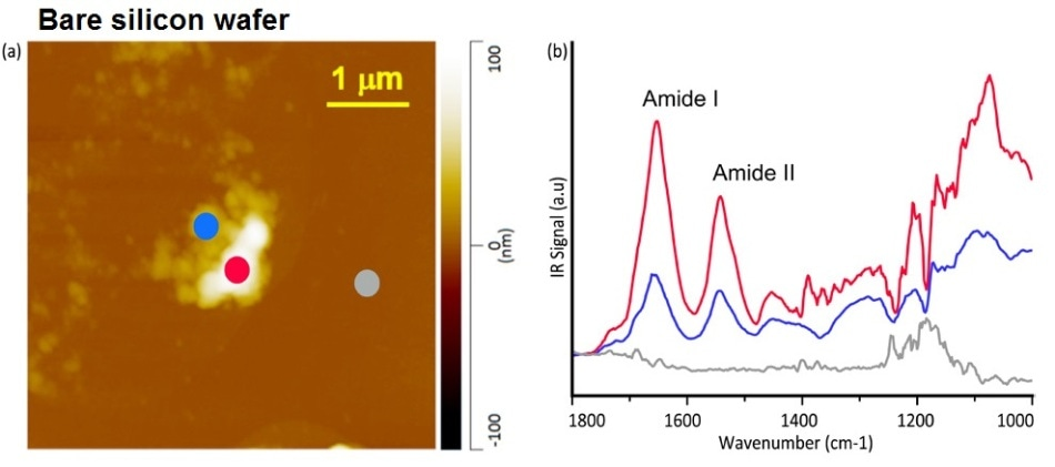 AFM height image (a) and corresponding AFM-IR spectra (b) of organic residue on a silicon wafer show clear Amide I and II bands, indicating human skin residue. The colored line spectra corresponded to colored measurement pixels in the AFM image.