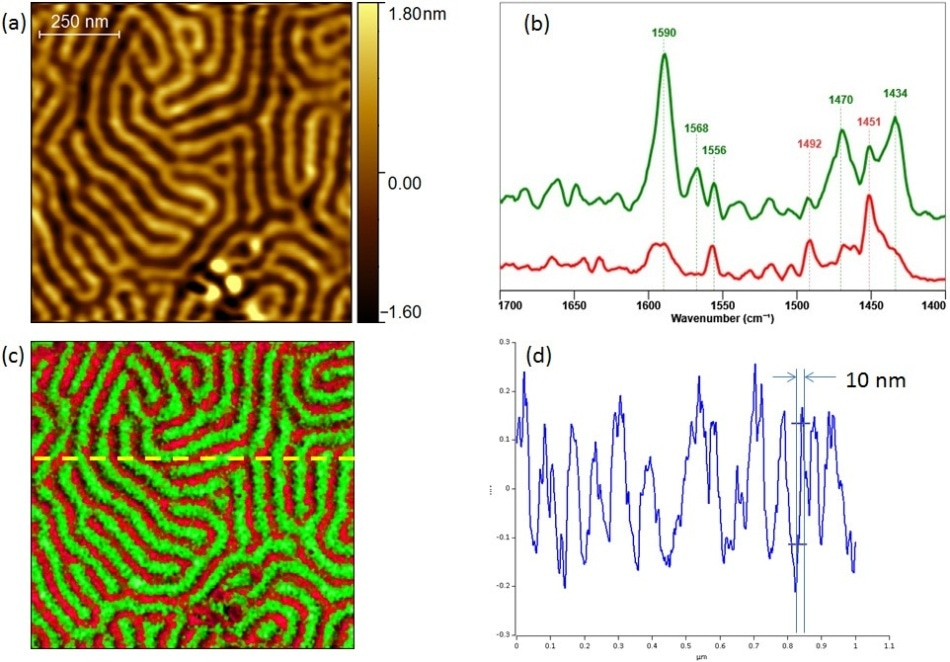 Chemical characterization of PS-P2VP block copolymer sample by Tapping AFM-IR; (a) Tapping AFM height image; (b) Tapping AFM-IR spectra clearly identifying each chemical component; (c) Tapping AFM-IR overlay image highlighting both components (PS@ 1492 and P2VP@ 1588); and (d) profile cross section highlighting the achievable spatial resolution, 10 nm. Sample courtesy of Dr Gilles Pecastaings and Antoine Segolene at University of Bordeaux.