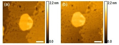 Topography image of a 3-4 layer MoS2 (a) at first and (b) after a sequence of 5  scans at 0.1 V set point using a PPP-NCSTPt probe with spring constant of ~7 N/m. Scale bar is 50 nm.