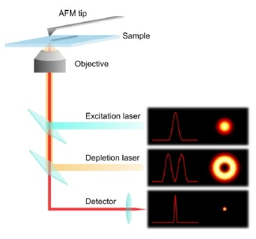 """Principle of combined AFM and STED microscopy. The """"donut"""" shape of the encircling depletion (STED) laser confines the spot of effective fluorescence."""