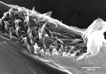 Tear on PvDF electrospinning fiber.